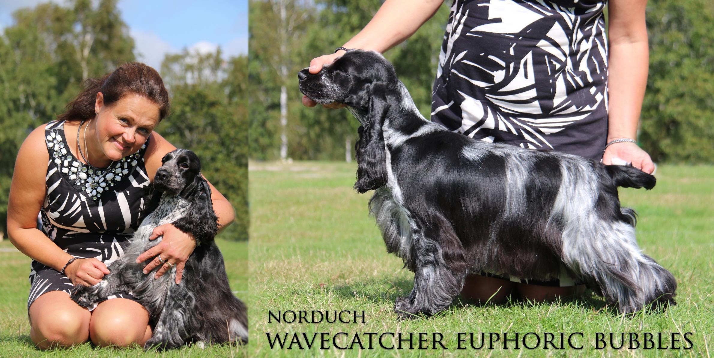 Bianca- SE U(u)CH NOUCH DKUCH NORDUCH Wavecatcher Euphoric Bubbles ÅRETS COCKER 2018
