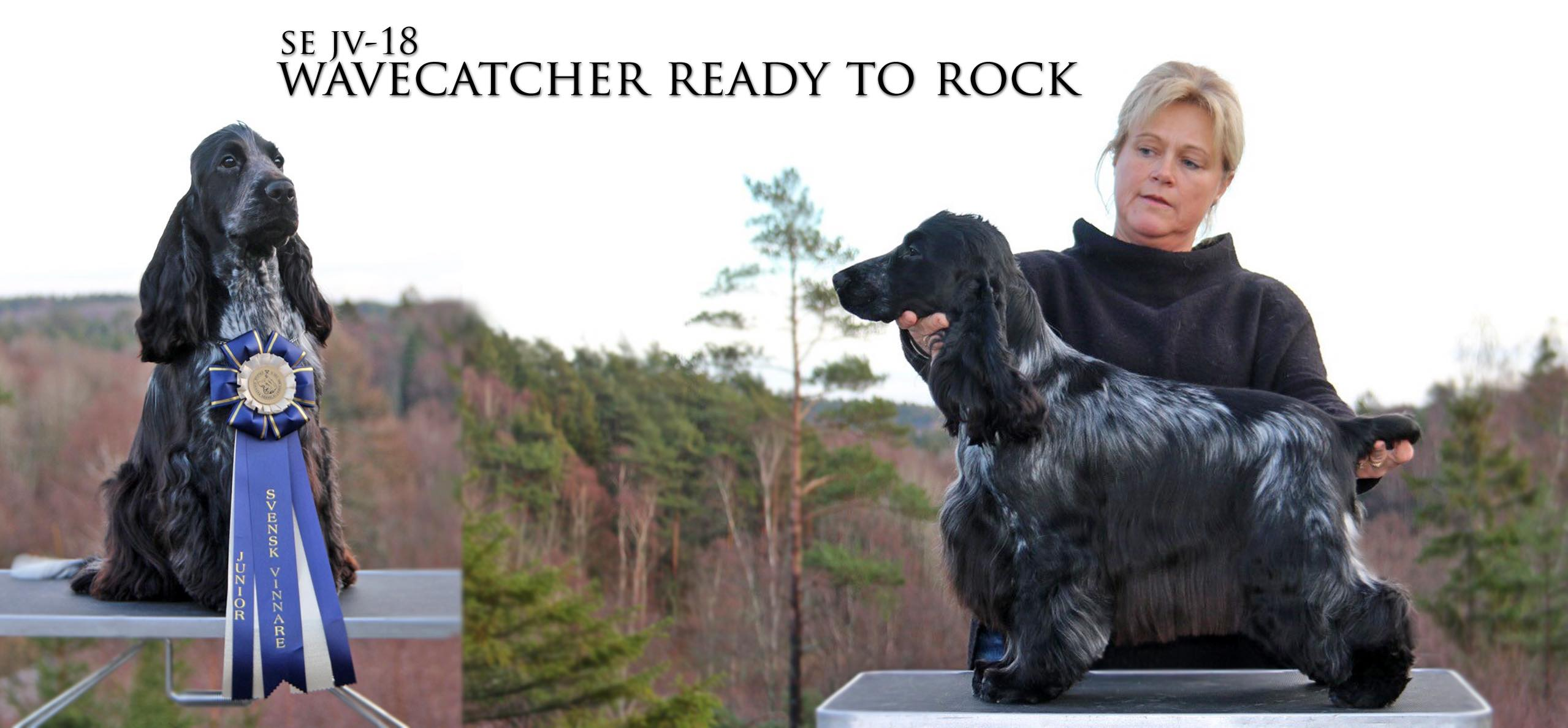 Prosecco- SE JV-18 Wavecatcher Ready To Rock Årets junior cocker 2018