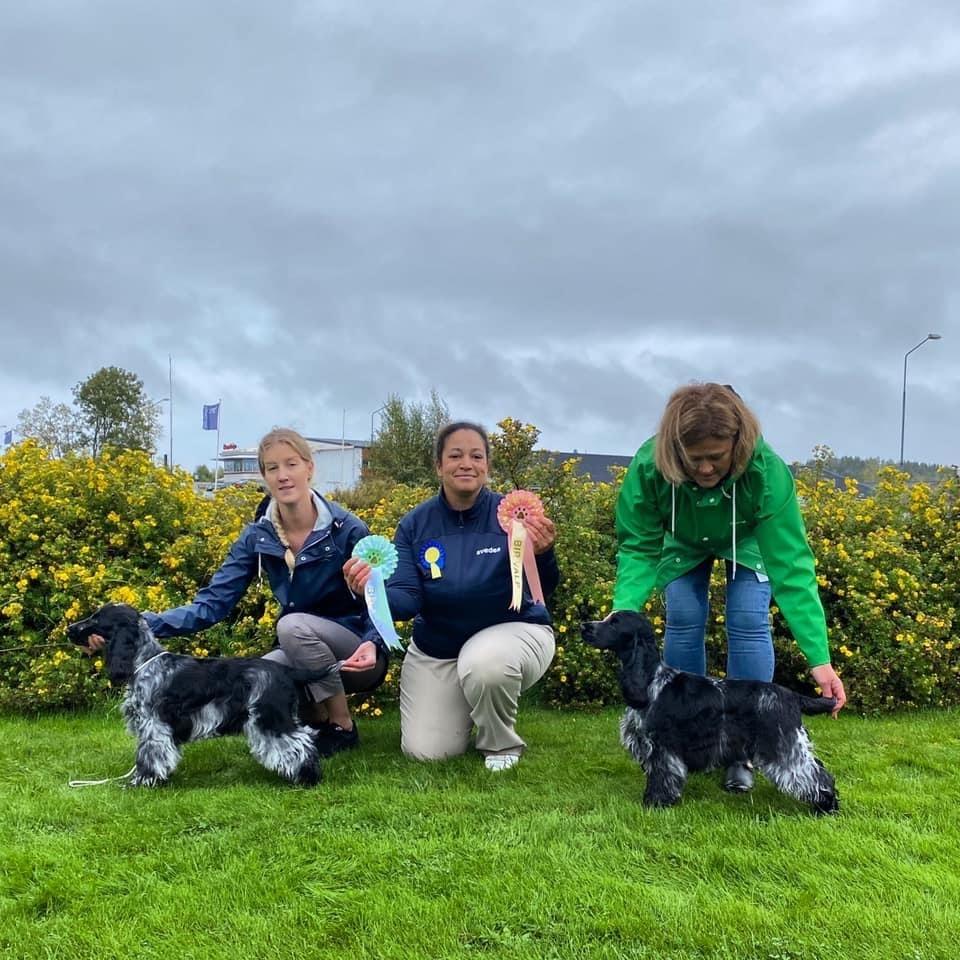 Inofficiell hundutställning på Goviks hundakademi